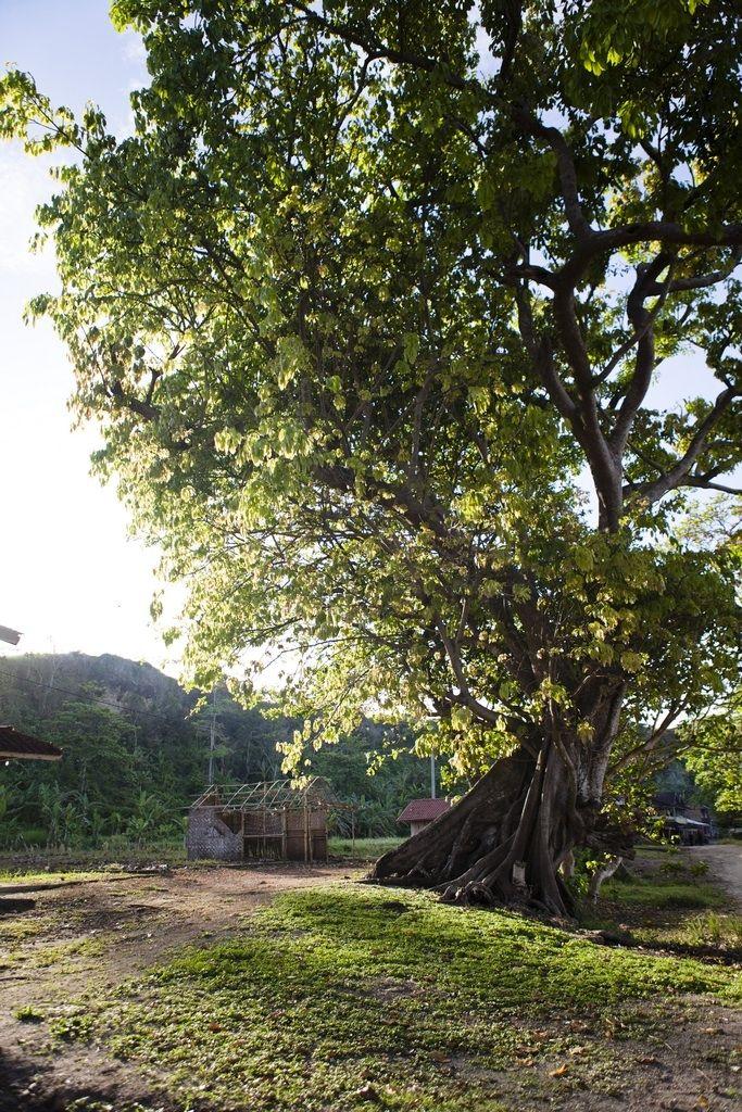Ranca buaya village