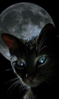 Chat noir avec pleine lune.