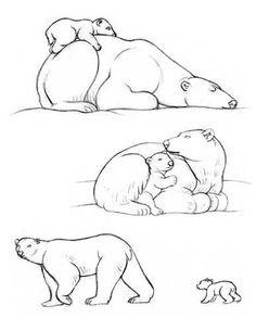 polar bear outline to draw