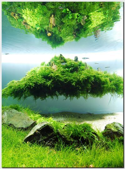 die besten 25 aquarium einrichtungsbeispiele ideen auf pinterest salzwasser aquarien. Black Bedroom Furniture Sets. Home Design Ideas