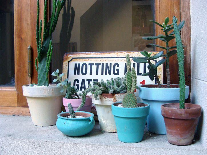 M s de 1000 im genes sobre cactus en pinterest plantas - Cactus en macetas pequenas ...
