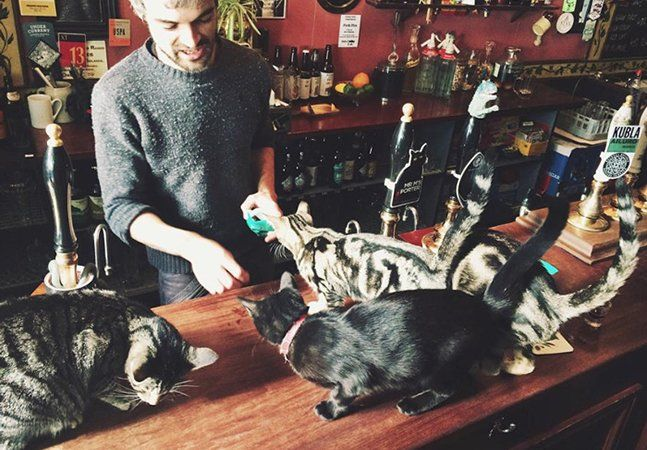 """Se você é daqueles que não curtem muito socializar com as pessoas no balcão do bar, talvez seja porque você está frequentando o lugar errado. Se você dispensa a companhia humana por gatinhos, precisa conhecer o pub inglês Bag of Nails, em Bristol. O pequeno recinto conta com a presença de 15 gatos residentes. O proprietário Luke Daniels disseque """"uma vez tivemos 24, mas isso foi demais"""". Segundo ele, todos os felinos nasceram no próprio pub e, pelo visto eles adoram os clientes: """"Alguns…"""