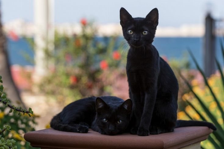 Moonpaw/wing- she-cat and Blackpaw/tail- tom (former rouges, brought to the clan as kits with Spinpaw.) brother and sister to Spinpaw.