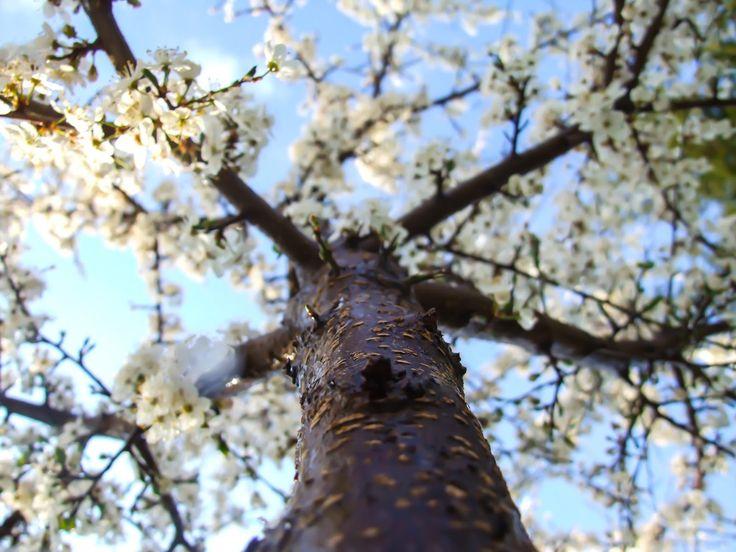 Kica Bijoux: *Spring is here*:)