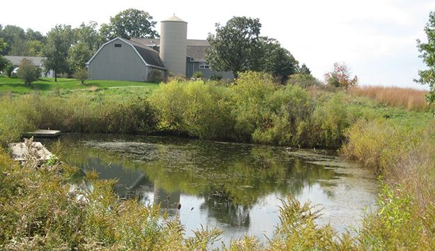 Manage fish friendly farm pond get your farm pond fish for Farm pond maintenance
