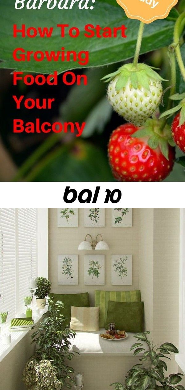 Bal Balcony Barbara Balcony Gardening For Beginners Learn How