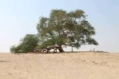 https://en.wikipedia.org/wiki/Tree_of_Life,_Bahrain