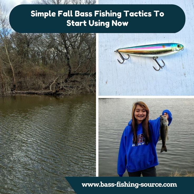 Simple Fall bass fishing tactics you can start using right now.