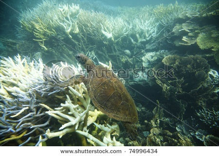 ningaloo reef (australia)