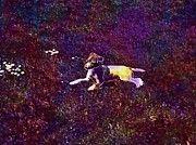 """New artwork for sale! - """" Dog Pet Jack Russell Animal Grass  by PixBreak Art """" - http://ift.tt/2eKodeL"""