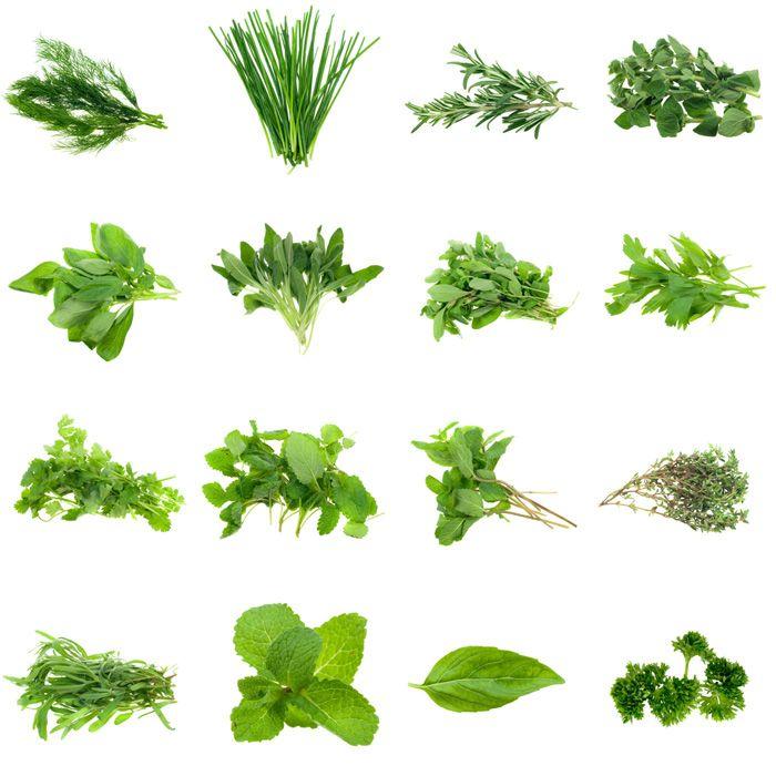 Plantes médicinales à boire. Infusions décoction et macération.