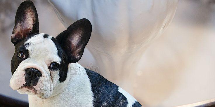 Cuidados para perros , Aprende como hacer pasta de dientes para perros casera y como lavar los dientes a tu perro en casa! (Fotos y Video)