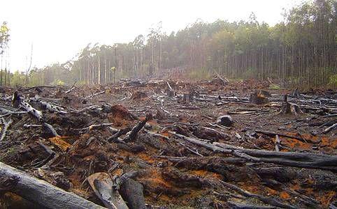 Resultado de imagen para perdida de la biodiversidad