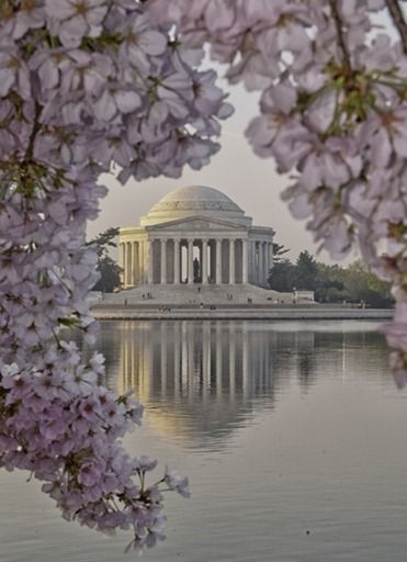 One of my favorite places to visit. Cherry Blossoms -- Washington DC