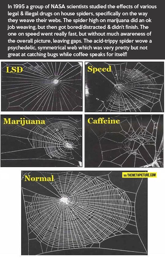 Spiders out of control…    saw this in (I think?) my college psychology text and often think of it re: caffeine addiction.  Still drink my coffee though. :)