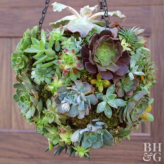This colorful succulent hanging is a modern twist on a hanging basket.