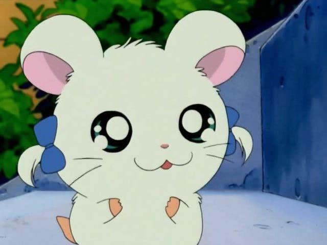 154 Best Hamtaro!!! Images On Pinterest