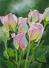Flower Watercolor Paintings - Rose Array by Sharon Freeman
