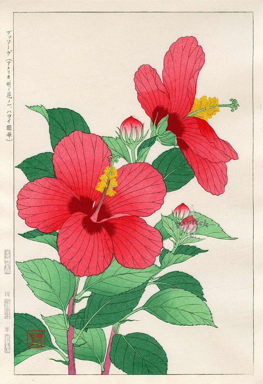 hibiscus from shodo kawarazaki spring flower japanese woodblock prints