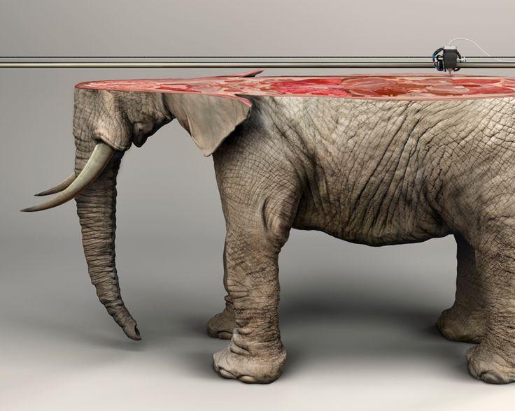 Des Animaux imprimés en 3D illustrent la Nature irremplaçable des Espèces menacées (2)