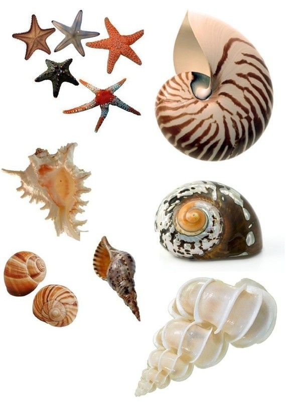 Sea Shells Illustration