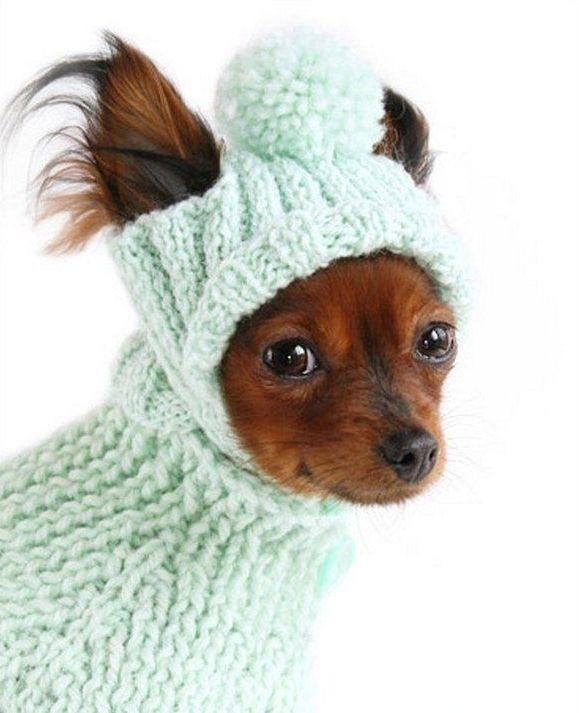 Шапка для собаки спицами схемы с пошаговым фото