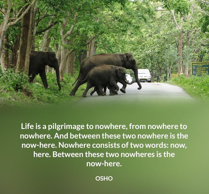 Life is a pilgrimage to nowhere, from nowhere to nowhere. And between these two nowhere is the now-here. Nowhere consists of two words: now, here. Between these two nowheres is the now-here. OSHO