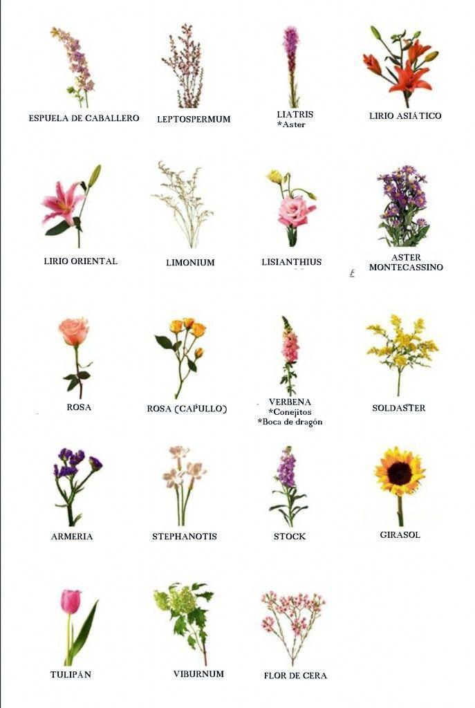 фонда цветы на латыни с картинками же, после прочтения