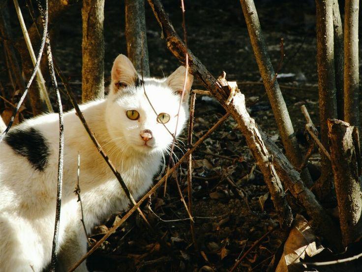 Cat Sunshine Korea