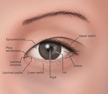 applying makeup to asian eyes