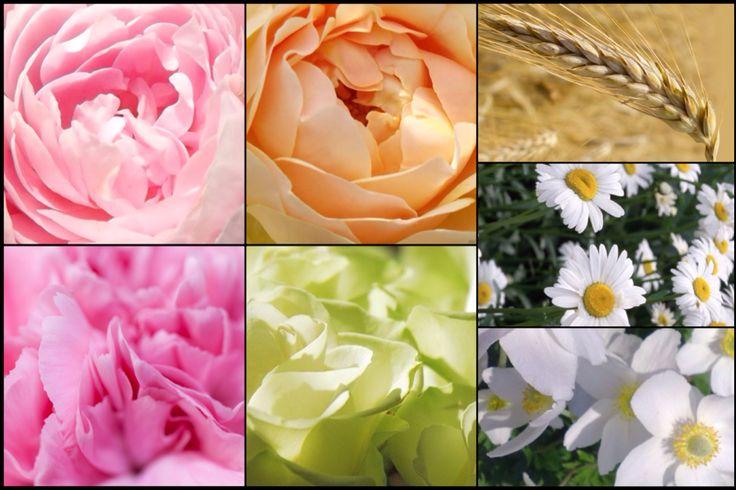 Menyasszonyi csokor (angol rózsák, szegfű, klasszikus rózsa, búzakalász, kamilla, szellőrózsa)