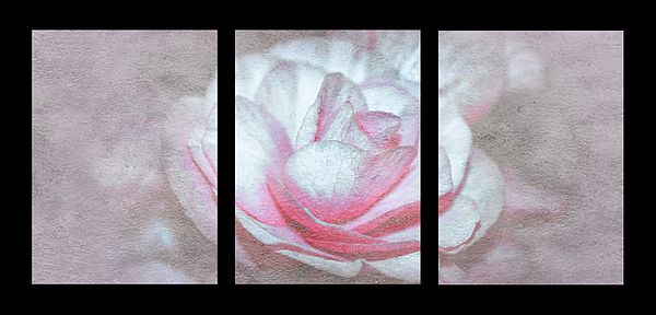 Photography Art design for Office and Home Decor-Pastel Rose Triptych Panel by Larysa Koryakina.  Available in many sizes and in Acrylic, Metal, Canvas, Framed and Standard Print.
