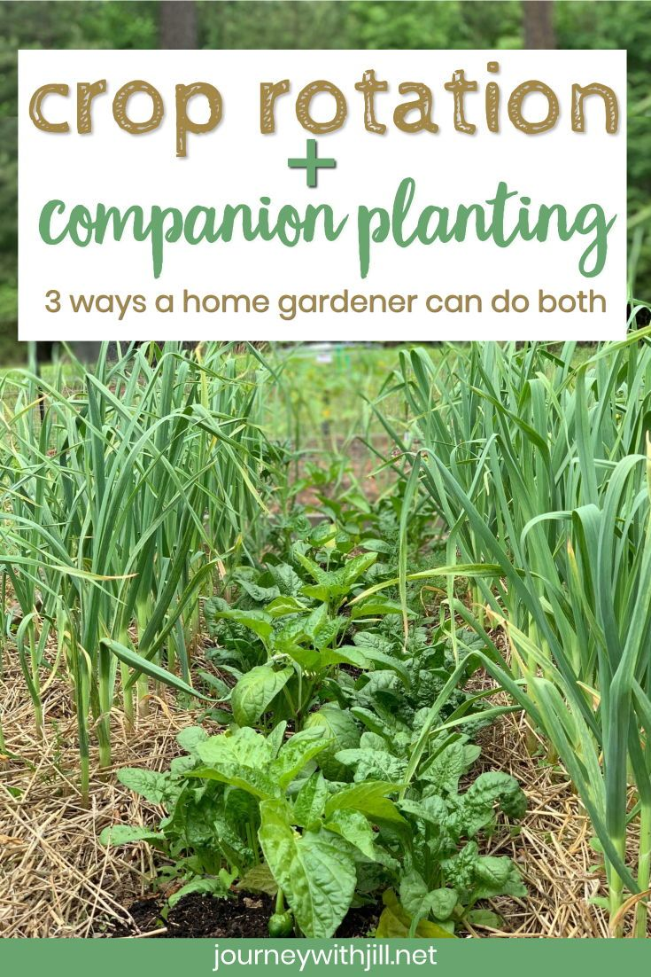 Crop Rotation For Home Vegetable Gardeners The Beginner S Garden Crop Rotation Garden Care Small City Garden