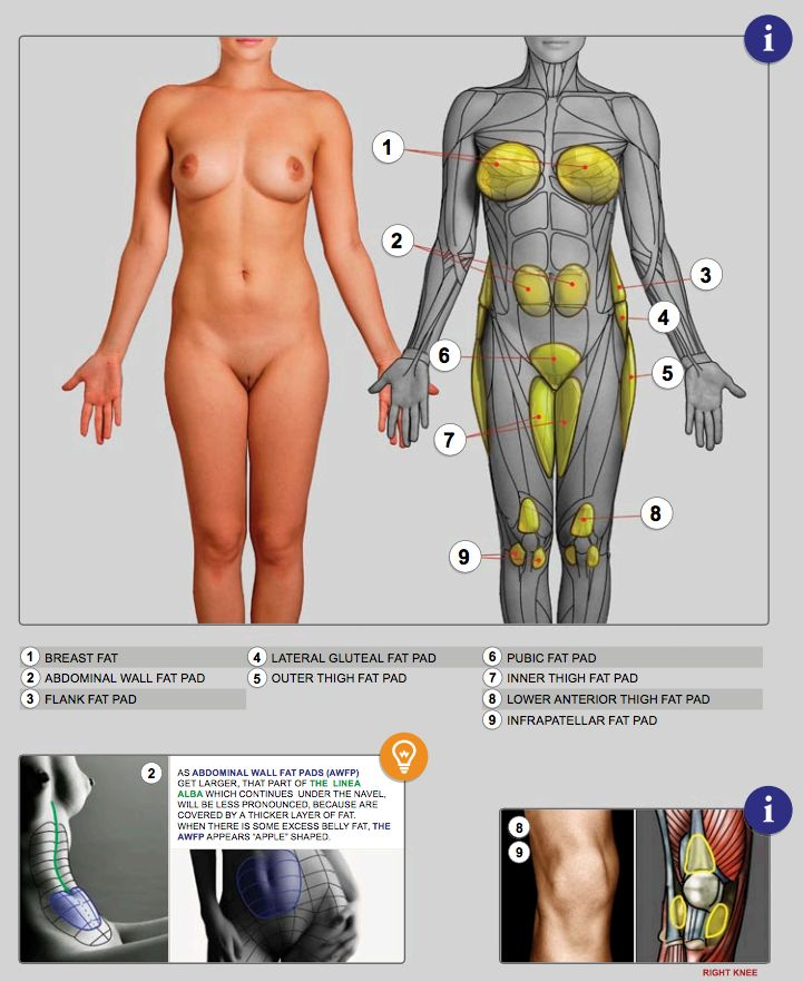 Female anatomy from Anatomy for Sculptors