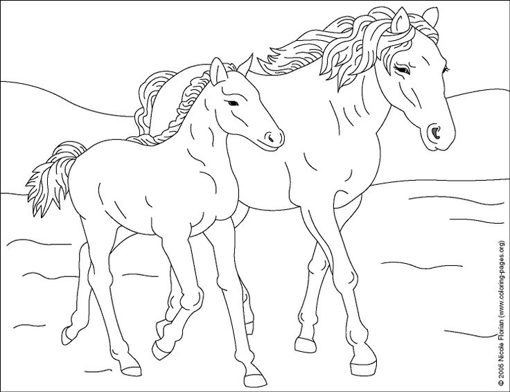wild horses 2 printable coloring pages at nicoles coloring pages - Horses Printable Coloring Pages