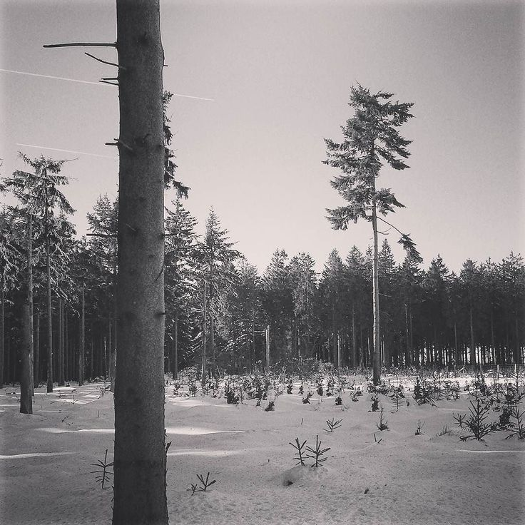 Virée dans les Hautes-Fagnes #neige #belgique #belgium #visitbelgium #winter #instatravel #travelgram #travelling #instagood #igers #igersbelgium #explore #slowtravel #neverstopexploring
