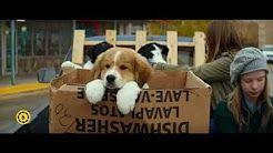 egy kutya négy élete - YouTube