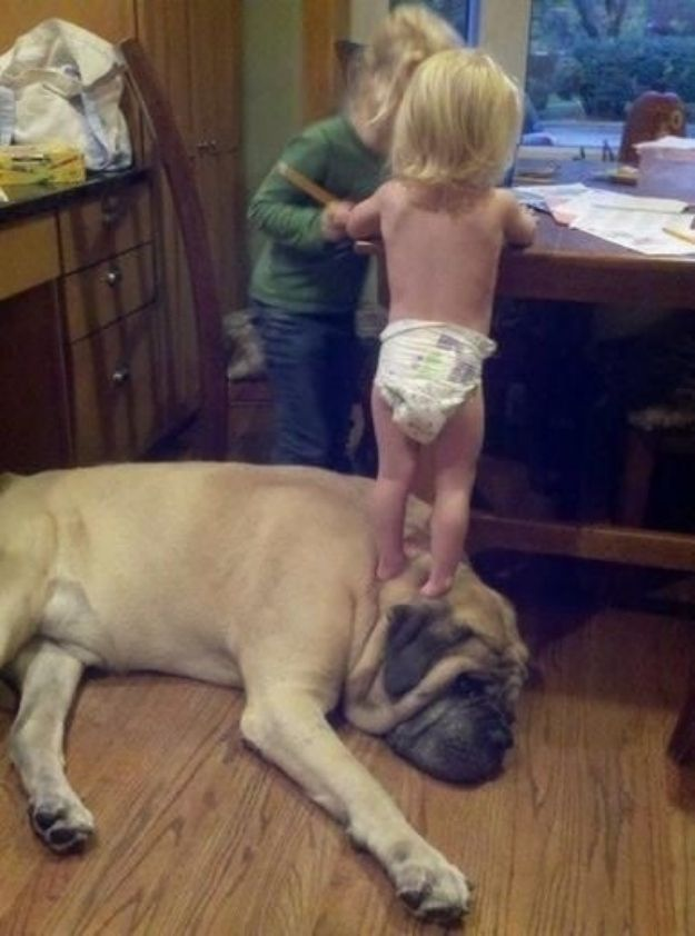 And this dog that will finally help you reach the cookie jar.    27 Dogs That Will Do Anything For Kids