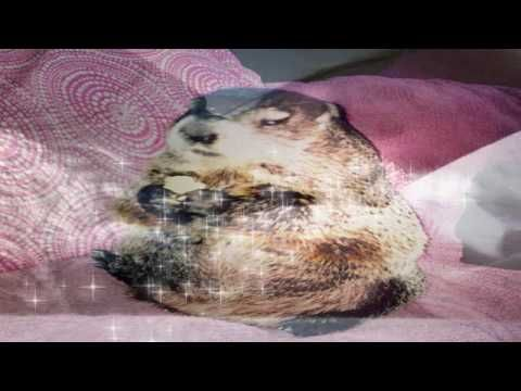 Blind Woodchuck Saved From Death In A Backyard Loves To Sleep Together W...