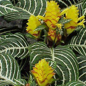 Las 25 mejores ideas sobre perennes de sombra en for Lista de plantas de sombra