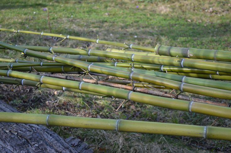 Mein Bambus wächst wie verrückt und breitet sich massiv aus  – warum ich ihn trotzdem (oder genau deswegen liebe) schildere ich hier.