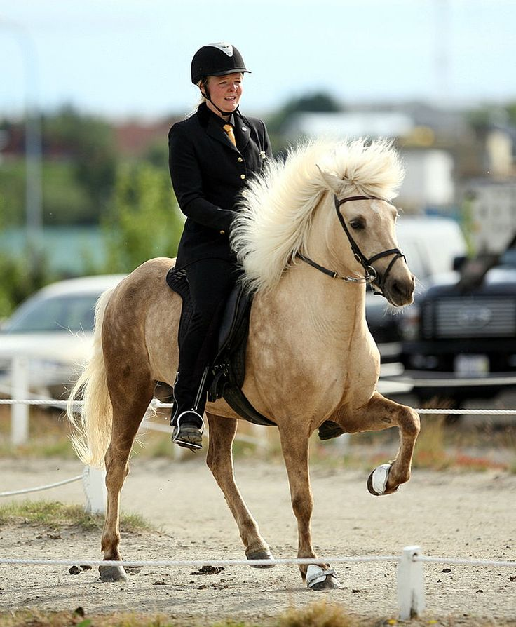 7 Things You Didn't Know About The Icelandic Horse
