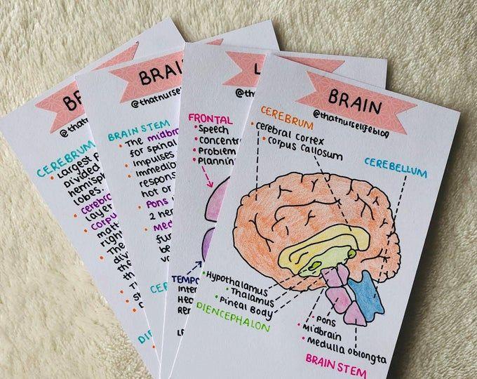 Anatomy Bundle Flashcards Pdf Study Flashcards Anatomy Flashcards Biology Notes