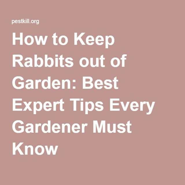 how to keep wild rabbits in your yard