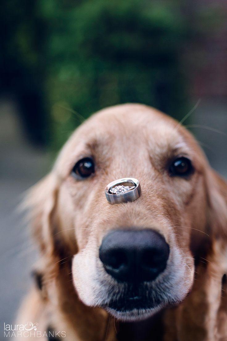 Wedding rings, dog ring bearer, golden retriever, Georgetown Ballroom, Seattle Wedding photographer, Laura Marchbanks Photography