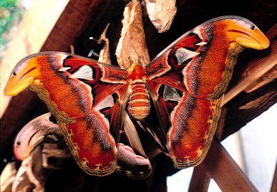 ¿Qué son las Mariposas? - MICRA - MICRA