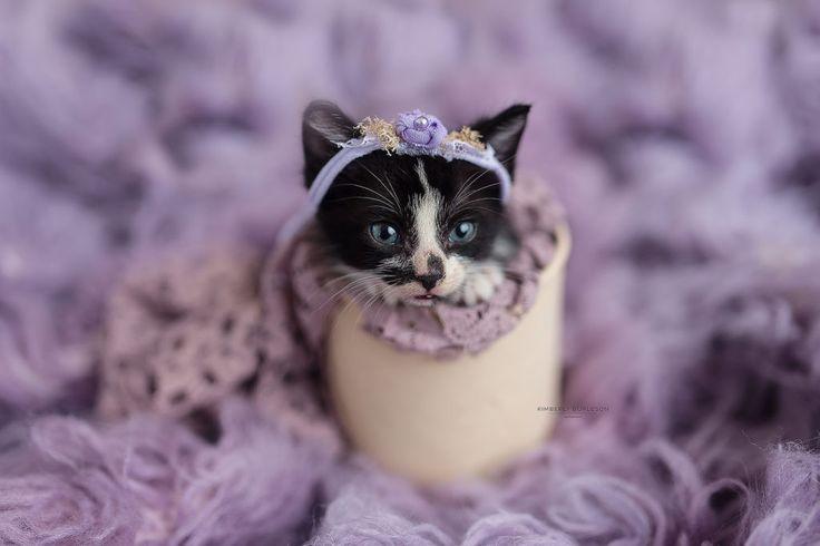 tuxedo kitten kitten costume