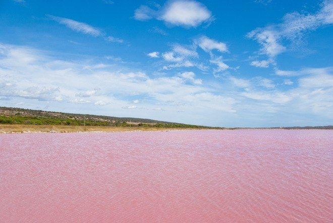 Розовое озеро Хиллер в Австралии - Путешествуем вместе
