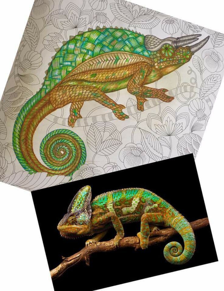 Coloring Books Colouring Animal Kingdom Zentangle Nature