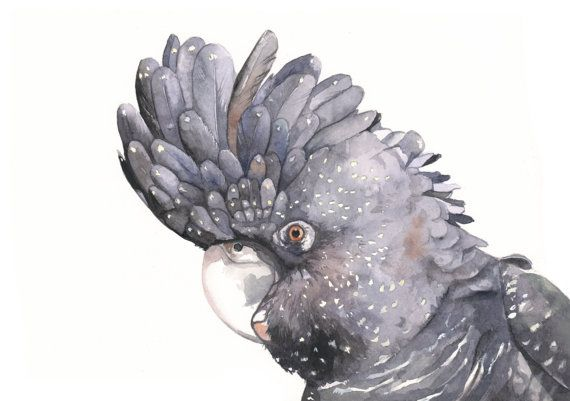 Black Cockatoo watercolor print of watercolor by Splodgepodge, $20.00